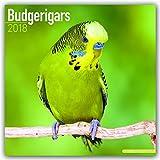 Budgerigars Calendar - Parakeet Calendars -2018 Wall calendars - Calendars 2017 - 2018 Wall Calendars - Bird Calendars - Monthly Wall Calendar by Avonside