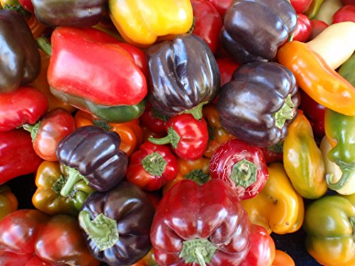 Pepper Sweet - Sweet Pepper Seeds Assortment- 6 Varieties- Over 300 Seeds- All Non-GMO, Heirloom Varieties