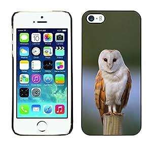 Be Good Phone Accessory // Dura Cáscara cubierta Protectora Caso Carcasa Funda de Protección para Apple Iphone 5 / 5S // owl winter snow perched feathers white