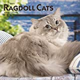 Ragdoll Cats 2021 12 x 12 Inch Monthly Square Wall Calendar, Animals Cat Feline