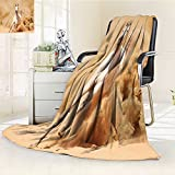 Digital Printing Blanket Arabian Breed Running Out of the Desert Storm Sand High Tail Creature Cream White Summer Quilt Comforter