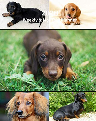2020 Weekly and Monthly Planner: Dachshund Dogs Collage  - Monthly Calendar with U.S./UK/ Canadian/Christian/Jewish/Muslim Holidays- Calendar in Review/Notes 8 x 10 in.- Dog Breed Pets by Dazzle Book Press