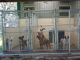 Free Doggie Daycare, Boarding & Kennel Business Plan