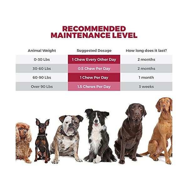 MAX Cranberry for Dogs - Cures & Prevents Painful UTI Urinary Tract Infections. Bladder Support Pills & Kidney Health. No More Antibiotics & Incontinence! D-Mannose & Probiotics Chews, Save on Vet 3