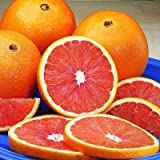 Cara Cara Navel Orange Trees - Large Orange Citrus Trees, Ready to Give Fruit The 1st Year - 1-2 ft.