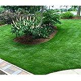 Amazoncom 1 Packet Of 40 Seeds Desert Carpet Acaciafabaceae