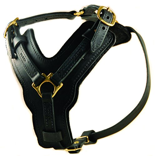 Dean & Tyler Leather Dog Harness - ''The Victory'' - Medium Girth: 23'' - 34'' Neck: 12'' - 23''- BLACK - Handmade From Leather - With Belt Style Buckles - For Medium Dogs by D&T HARNESSES