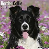Border Collie Calendar - Only Dog Breed Border Collies Calendar - 2016 Wall calendars - Dog Calendars - Monthly Wall Calendar by Avonside
