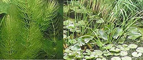 Haus&Garten - Pérgola de Agua para macetas (10 Plantas): Amazon.es: Jardín