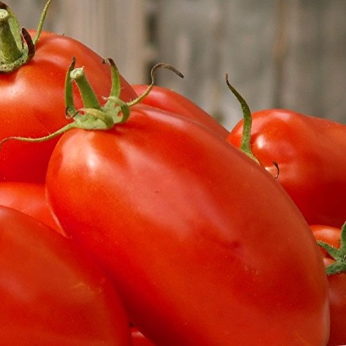 Agro F1 Hybrid Tomato Seeds - A Very Heavy Producer All Season!!!!!! 25 Seeds