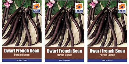 3 Packets of Dwarf French Bean Purple Queen Vegetable Garden Seeds