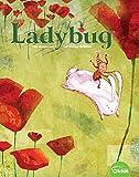 Ladybug: more info