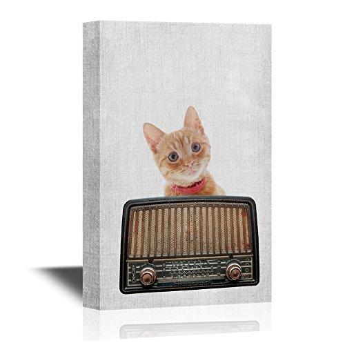 Music Intage Radio and Cat