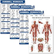 Palace Learning 4 Pack - Dumbbell Workout Exercise Poster Volume 1, 2 & 3 + Muscular System Anatomy Chart
