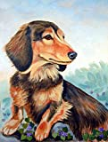 Caroline's Treasures 7023CHF Dachshund Chocolate and tan Long Haired Flag Canvas, Large, Multicolor