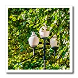 3dRose Alexis Photography - Objects - Street lamp with three white glass bulbs inside lime tree foliage - 10x10 Iron on Heat Transfer for White Material (ht_283762_3)