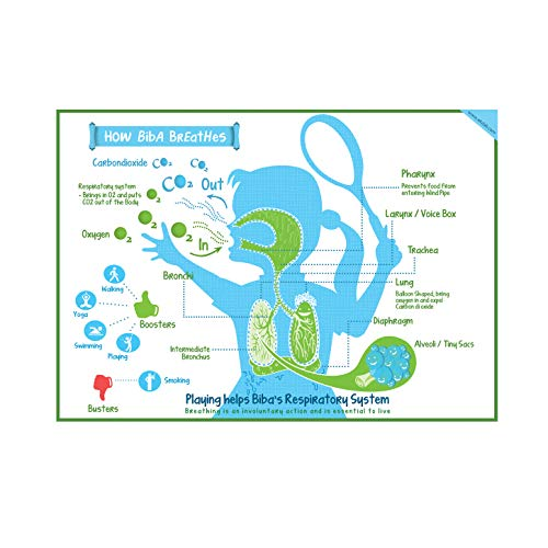 respiratory system for kids - 9