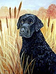 Multicolor 3.25 by 5.5 Carolines Treasures SS8043SN Curly Coated Retriever Refillable Sticky Note Holder or Postit Note Dispenser