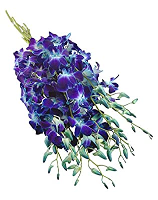 Fresh Cut Flowers - Blue Orchid with Vase by eflowerwholesale