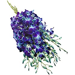 Premium Fresh Cut Flowers -Blue Dendrobium Orchids for Valentine's Day (10 Stems Orchid)