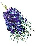 eflowerwholesale - Premium Cut Blue Orchids
