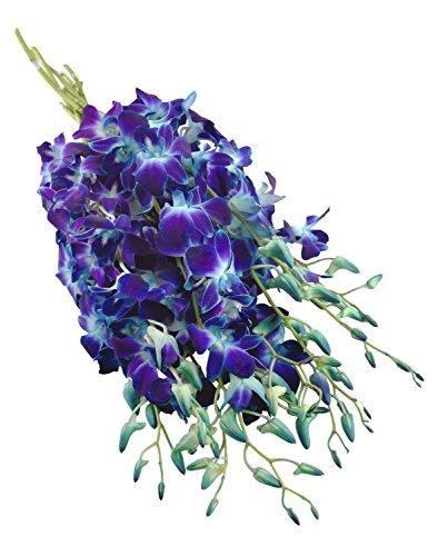 premium-cut-blue-orchids-10-stems-orchid