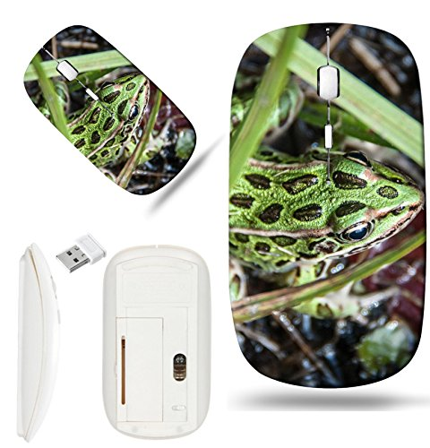 Luxlady Wireless Mouse White Base Travel 2.4G Wireless Mice with USB Receiver, 1000 DPI for notebook, pc, laptop,mac design IMAGE ID: 34692157 Spotted Green frog