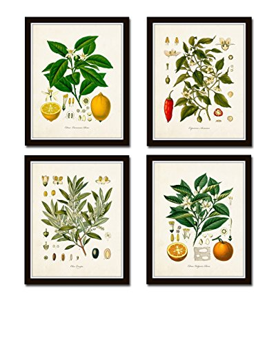 Matte Art Giclee (Vintage Fruit Print Set No. 20 Set of 4 Giclee Botanical Prints Home Decor Wall Art - Unframed)