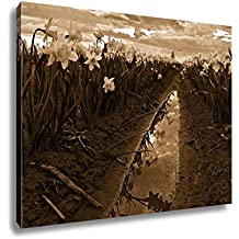 Ashley Canvas Daffodils Fild At Sunset And Reflection In Water Scagit Valley Tulip And, Wall Art Home Decor, Ready to Hang, Sepia, 16x20, AG6540493