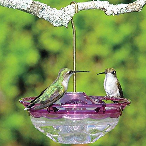 Park Seed Humm Blossom Hummingbird Feeder