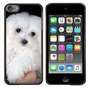 TECHCASE---Cubierta de la caja de protección para la piel dura ** Apple iPod Touch 6 6th Touch6 ** --Maltés pequeño perro blanco de pelo largo