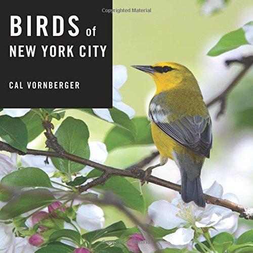 Birds of New York City - New York State Bird