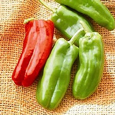 Giant Marconi Hybrid - Sweet Pepper Garden Seeds (Treated) - 100 Seeds - Non-GMO - Italian Grilling Pepper - AAS Winner -Vegetable Gardening Seed