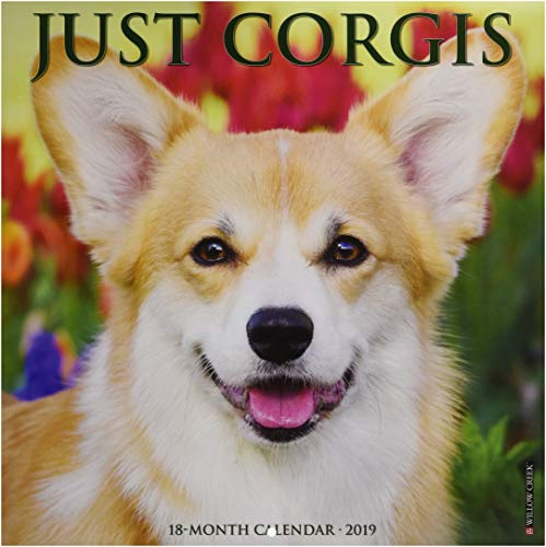 Just Corgis 2019 Wall Calendar (Dog Breed Calendar) ()