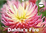 Amazon / Calvendo Verlag GmbH: Dahlia s Fire 2018 Amazing Dahlia Portraits Calvendo Nature (Gisela Kruse)