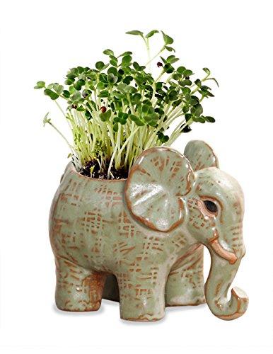 (Dahlia Cute Elephant Handmade Ceramic Succulent Planter/Plant Pot/Flower Pot, Son )
