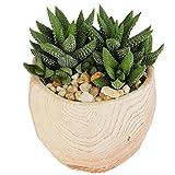 #6: Costa Farms Live Haworthia Succulent Plant in Wood Design Ceramic Pot