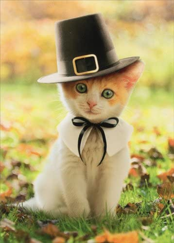 Pilgrim Cat - Avanti Kitten Thanksgiving Card