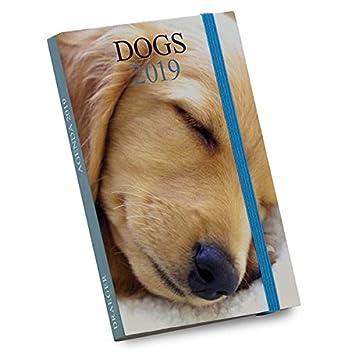 Draeger 72000152 - Agenda de bolsillo Perros 2019: Amazon.es ...