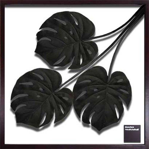 JIG リーフアート F-style フレーム Monstera Deliciosa / Black IFF-51079 B00L4T4P2A