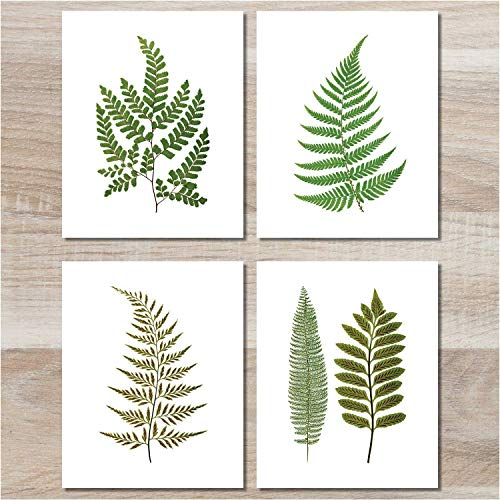 (Fern Wall Art (Set of 4) - 8x10 - Unframed - Botanical Prints - Green Decor)