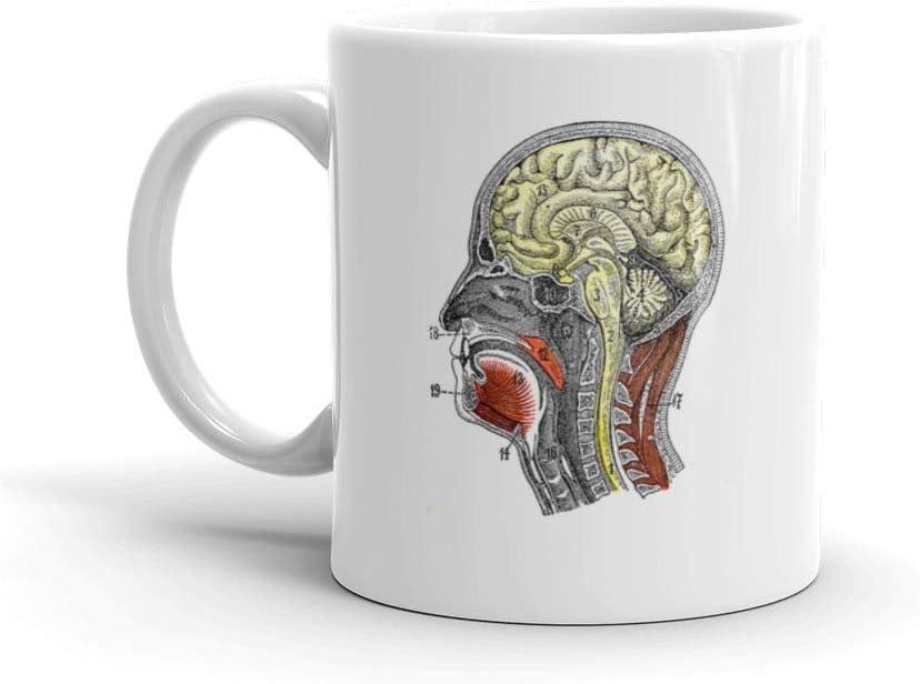 Taza de café divertida Dozili – Antiguo Médico Científico de Alta Resolución Sección Cabeza Cerebral Anatomía Cruz Taza Taza de café Taza de cerámica Taza de café Taza de 325 ml, color blanco