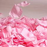 Fun Express Pink Rose Petals