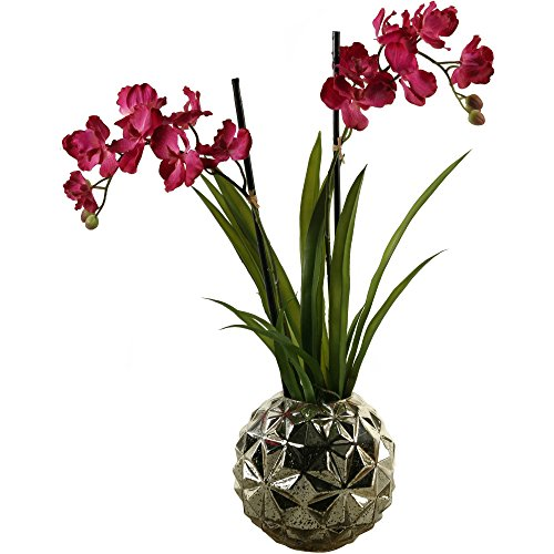 Mauve Vanda Orchids in Resin Contemporary Planter + Expert Guide