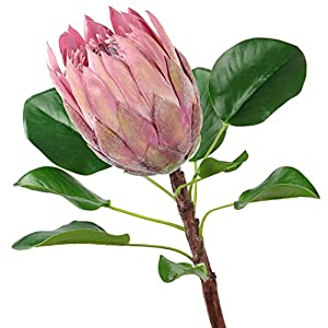 Rinlong Artificial Protea Cynaroides Silk Flower for Floral Arrangements Home Party Wedding Decor (Pale Mauve) 4