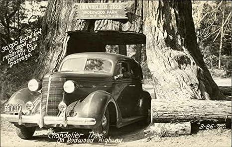 Chandelier Tree Underwood Park, California Original Vintage ...