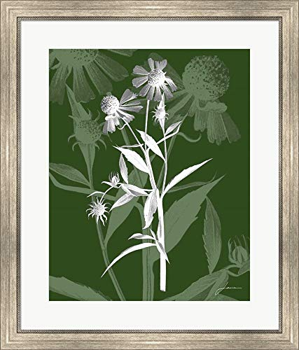 Jewel Stems III by James Burghardt Framed Art Print Wall Picture, Silver Scoop Frame, 26 x 30 ()