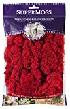SuperMoss (25122) Reindeer Moss Preserved, Red, 2oz