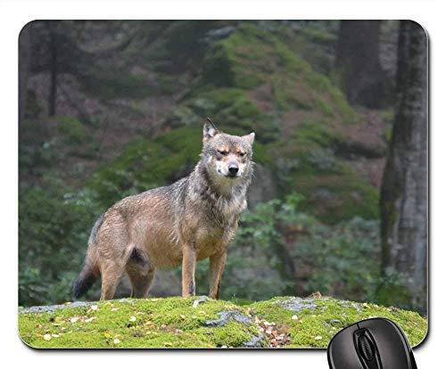 (Gaming Mouse Pads,Mouse mat,Wolf Bavarian National Park Alpha Dog Predator)