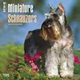 Miniature Schnauzers Calendar (Multilingual Edition)